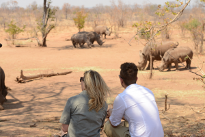 Lion And Rhino Safari Tour Packages