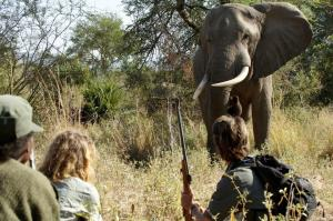 Zimbabwe And Zambia Exploration Tour Packages